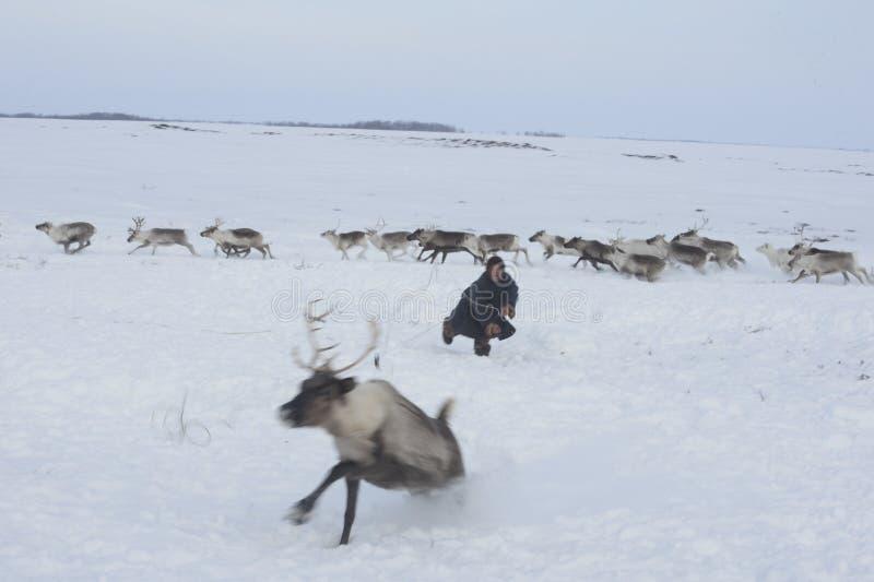 Russisches arktisches eingeborenes! stockbilder