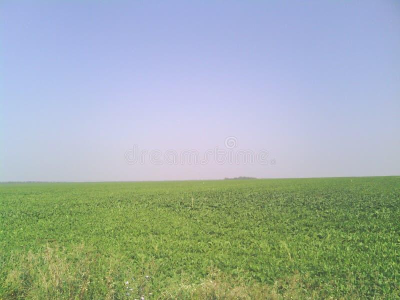 Download Russland-Gras stockbild. Bild von landschaft, horizont - 90236795