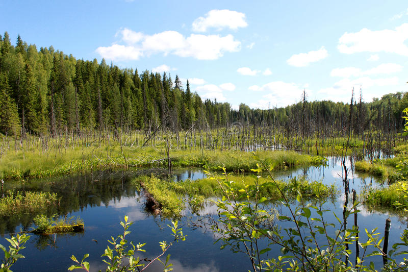 Download Russland Karelien Sumpf Mit Blauem Wasser Und Wald Auf Hintergrund Des Blauen Himmels Horizontale Ansicht Stockbild - Bild von sommer, betrieb: 90226243