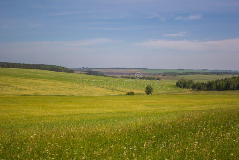Russland-` s Feld-Himmelsonne stockfotos