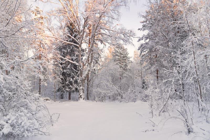 Russland, UralJanuary, Temperatur -33C Bäume bedeckt mit Schnee auf Frosty Morning Schöne Winterwaldlandschaft Schöner Winter-Mor lizenzfreie stockfotografie