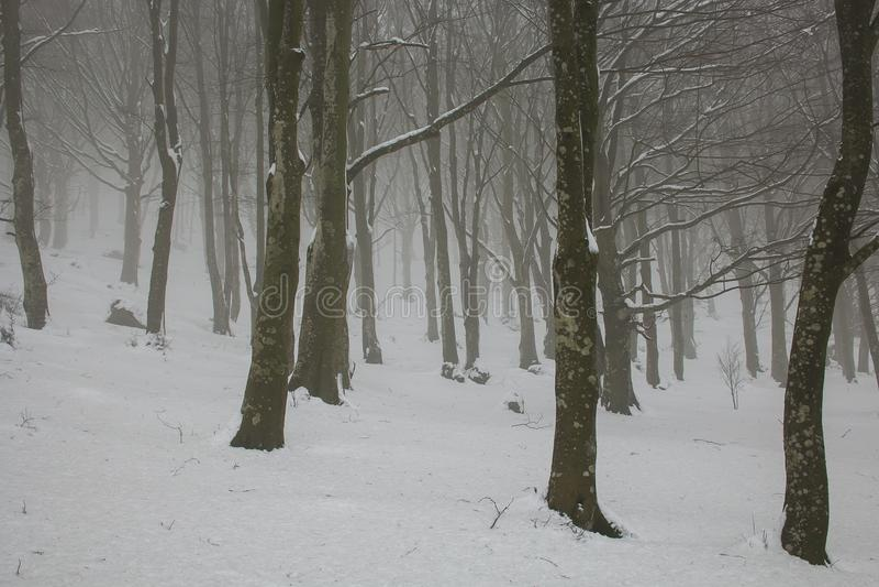 Russland, UralJanuary, Temperatur -33C Bäume des verschneiten Winters entlang dem Winter parken unter fallendem Schnee stockbild