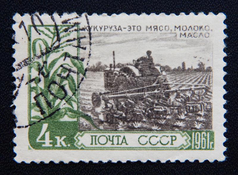 Russo URSS cerca do homem das mostras que planta o milho Cerca de 1961 fotografia de stock
