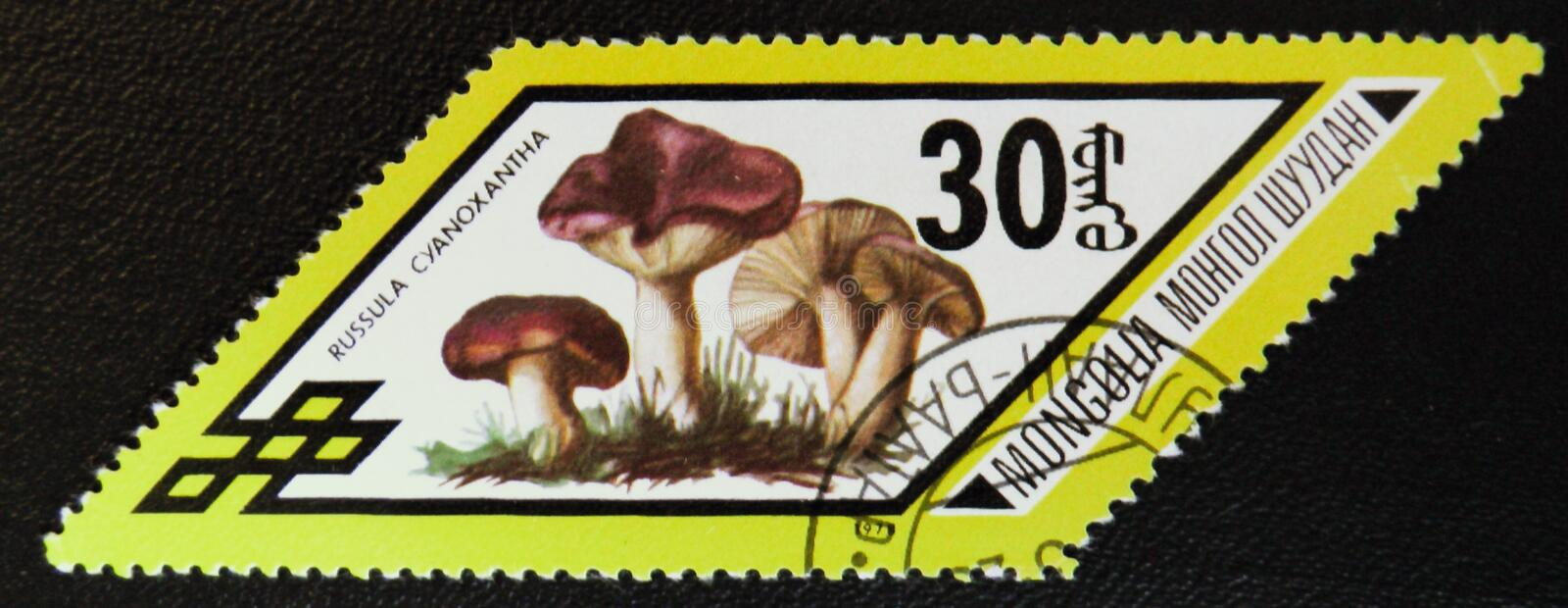 Russula cyanoxantha mushrooms, series, circa 1978. MOSCOW, RUSSIA - JANUARY 7, 2017: A stamp printed in Mongolia shows Russula cyanoxantha mushrooms, series stock photo