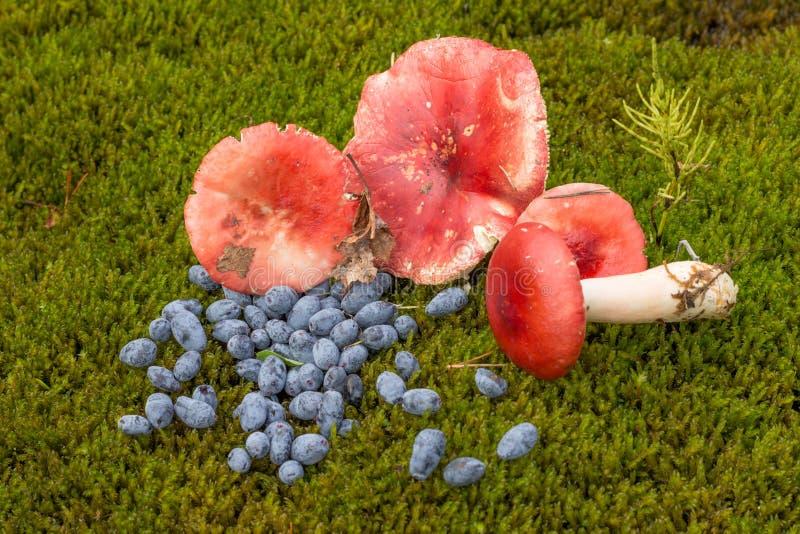 Russula en blauwe bessen op het gras met varenbladeren en cranb royalty-vrije stock afbeeldingen