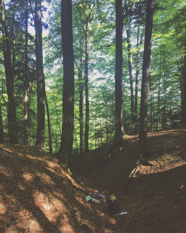 Rust in het bos stock fotografie