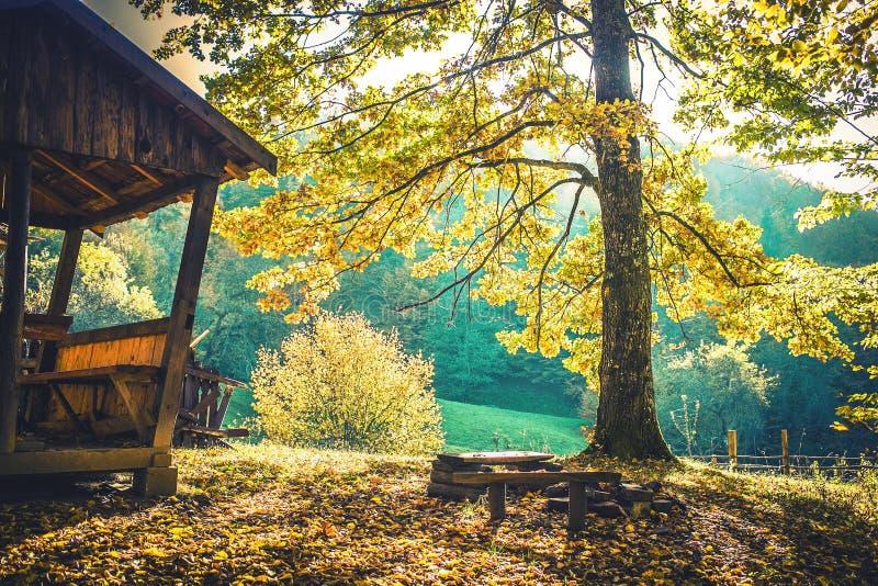 Rust in het groene bos royalty-vrije stock afbeeldingen