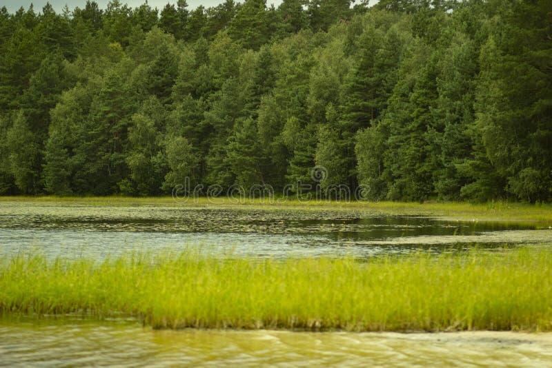 Rust op het bosmeer royalty-vrije stock afbeeldingen