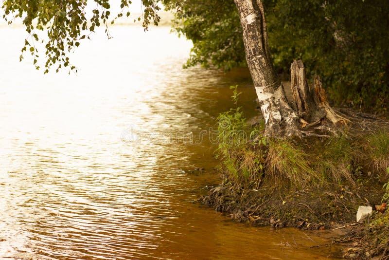 Rust op het bosmeer stock fotografie