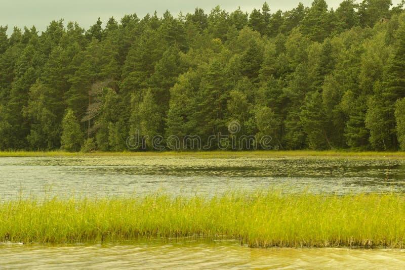 Rust op het bosmeer royalty-vrije stock foto's