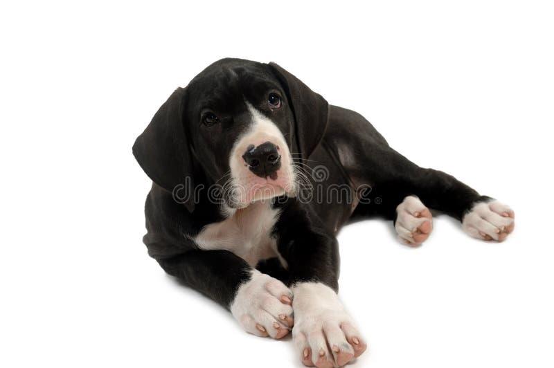 Rustende hond royalty-vrije stock fotografie
