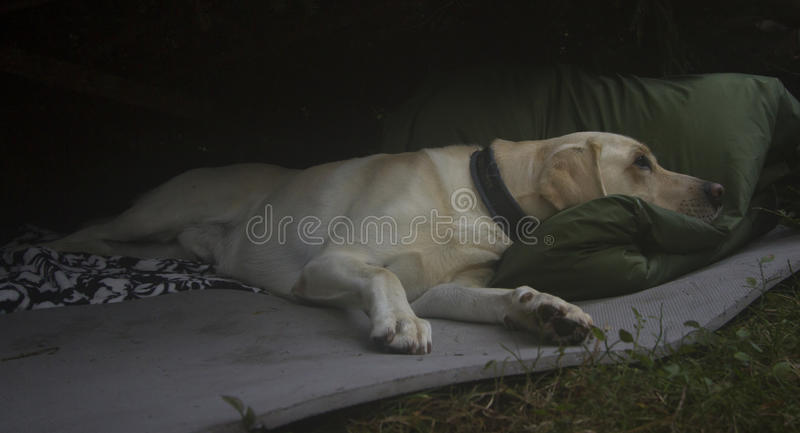 Rustende hond royalty-vrije stock afbeelding