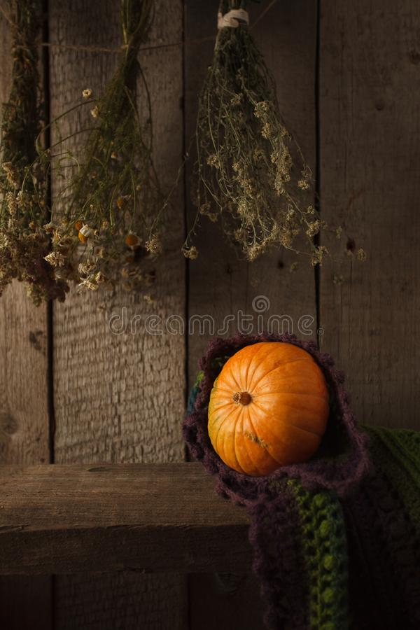 A rustic autumn still life with pumpkin, dry heral flowers and woolen scarf on a wooden surface. Thanksgiving, coutryside And Fall. Background stock photo