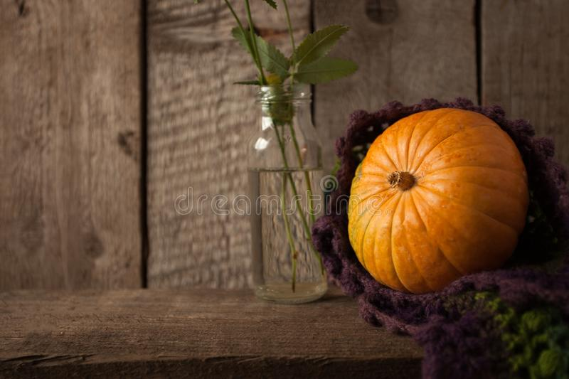 A rustic autumn still life with pumpkin and woolen scarf on a wooden surface. Thanksgiving, coutryside And Fall Background. A rustic autumn still life with royalty free stock photo