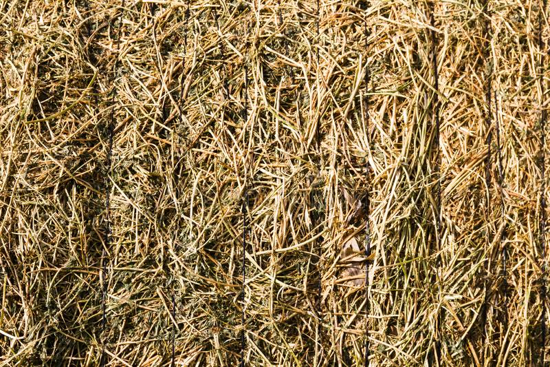 Rustic background with alfalfa bale texture in the field. Abstract rustic background with alfalfa bale texture royalty free stock photography
