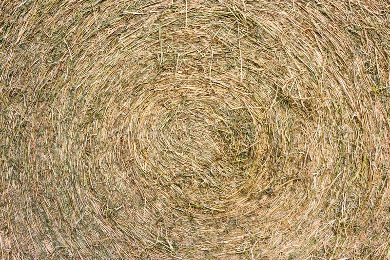 Rustic background with alfalfa bale texture in the field. Abstract rustic background with alfalfa bale texture royalty free stock photos