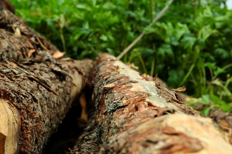 Rustic background pine log close-up. Vegetable background hard uneven bark of pine trees of a tree vertical against a background. Of blurred grass stock image