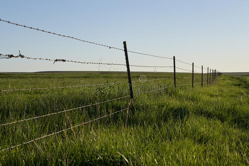 Rustic barbed wire fence around agricultural land. With strands of hair from cattle caught in the sharp barbs in a receding view royalty free stock photos