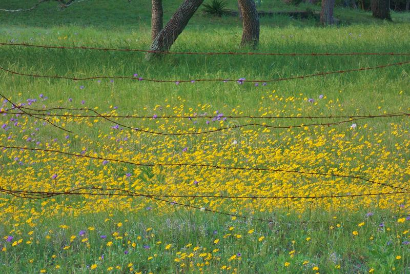 Rustic barbwire with Yellow wild flowers stock image