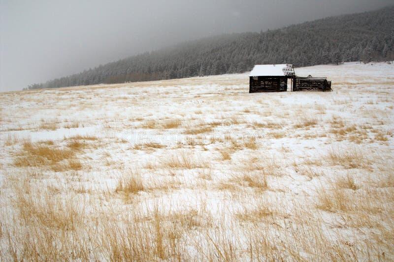 Rustic barn Evergreen royalty free stock image
