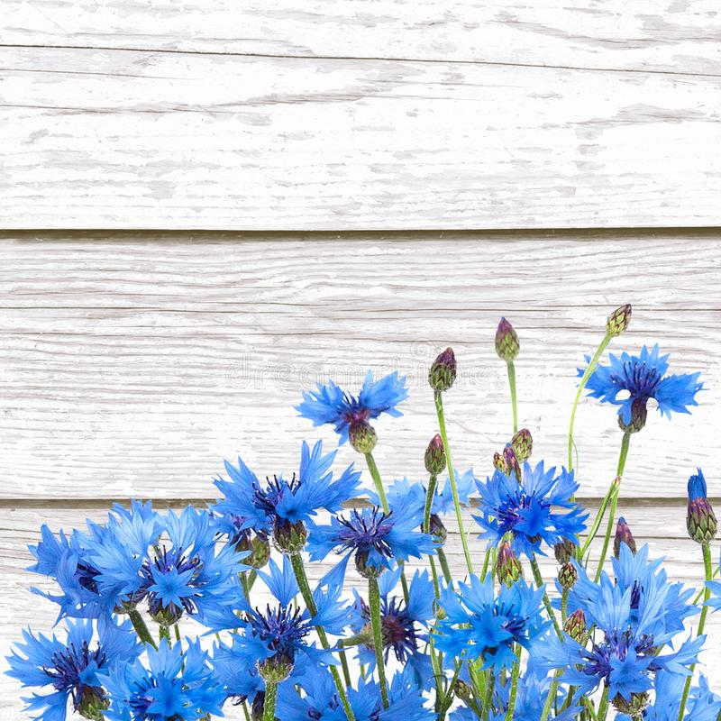Rustic Border of Blue Cornflower on wood white background. Beautiful Nature Summer Flowers background with copy space. Template for Greeting card for mother`s stock photography
