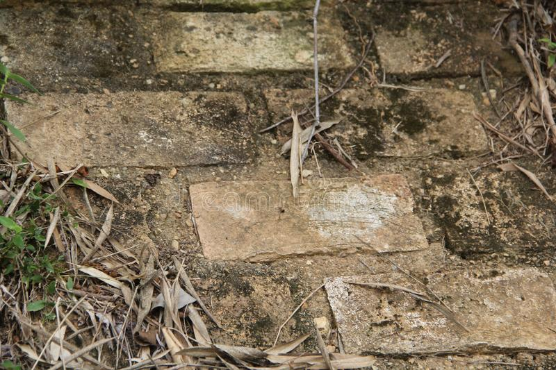 Rustic brick wall in the middle of the forest stock photography