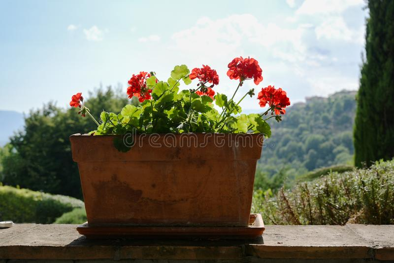 Rustic ceramic flowerpot with red geranium flowers on a garden wall in front of a sunny landscape. Rustic ceramic flowerpot with beautiful red geranium flowers royalty free stock photos