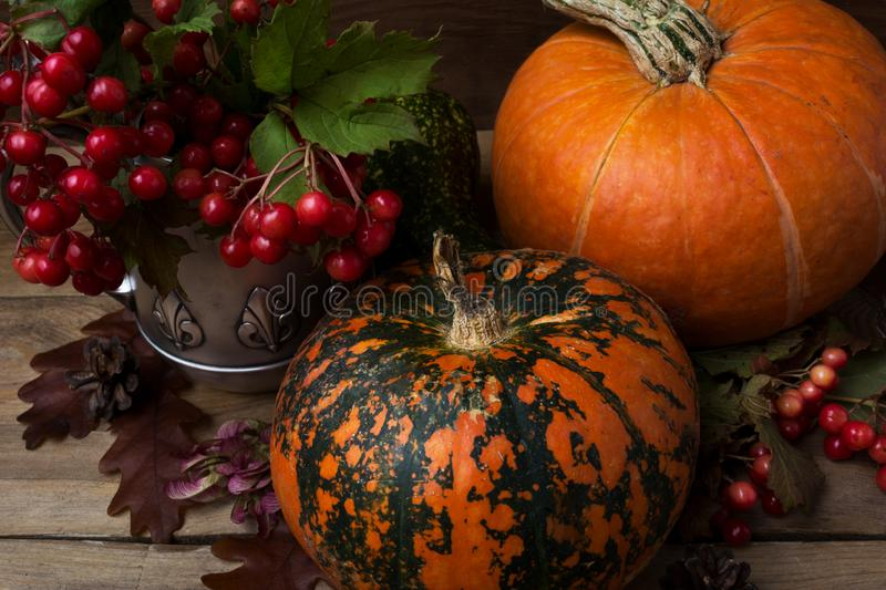 Rustic cornucopia decor with red berry and pumpkins stock images