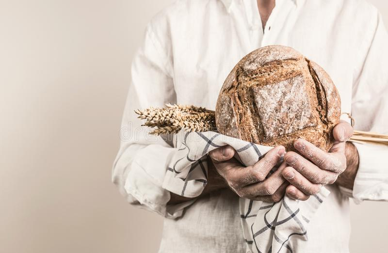 Rustic crusty loaf of bread in baker man`s hands. Rustic crusty loaf of bread and wheat in a strong baker man`s hands - closeup. Small business and slow food stock image