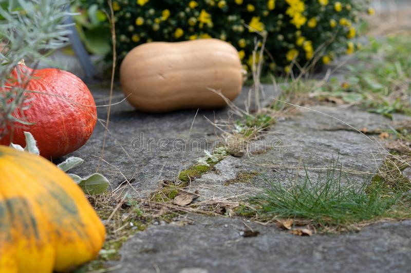 Rustic decorative gourd on stone footpath with yellow flower in background. Close-up and high angle view royalty free stock images