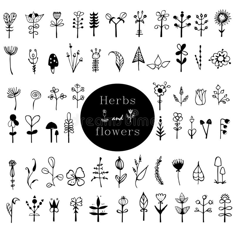 Rustic decorative plants and flowers collection. Black and white card with flowers. Romantic background for web pages, wedding in royalty free illustration