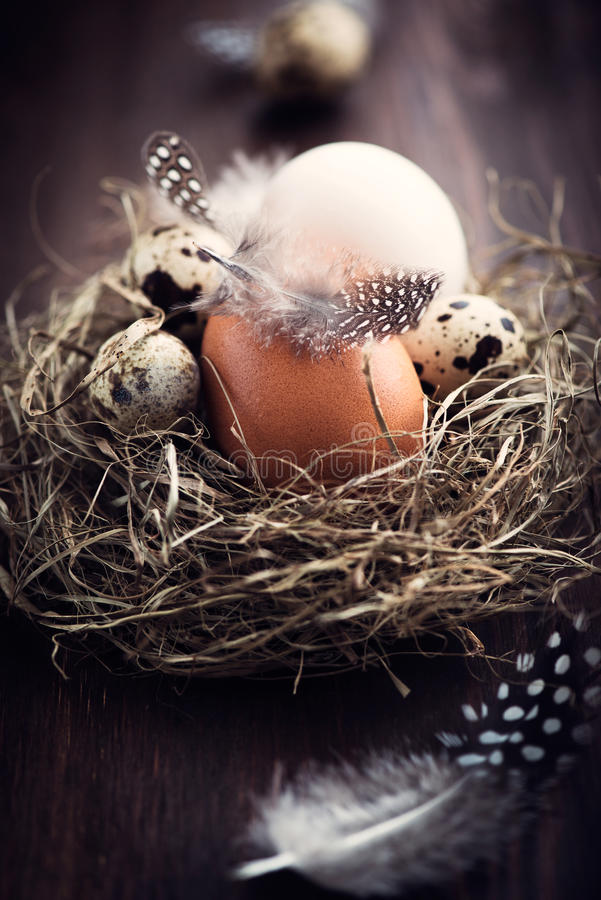 Download Rustic Easter Nest stock image. Image of naturally, close - 24167993