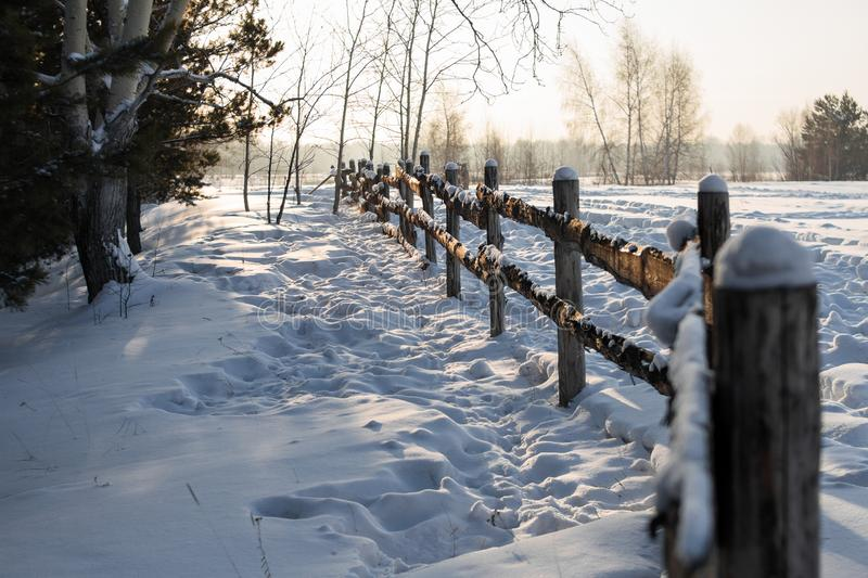 Rustic fence in the countryside in the forest covered with snow under the bright winter sun among the coniferous trees. royalty free stock photo