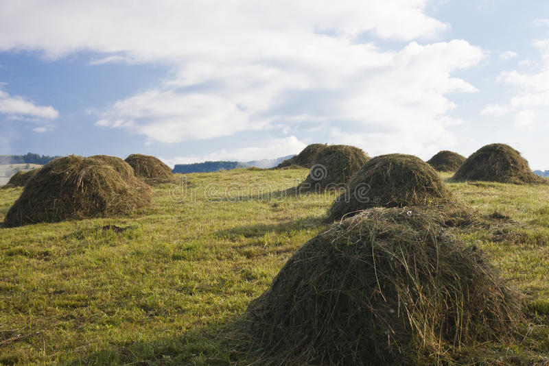 Download Rustic field stock image. Image of agricultural, landscaping - 15656319