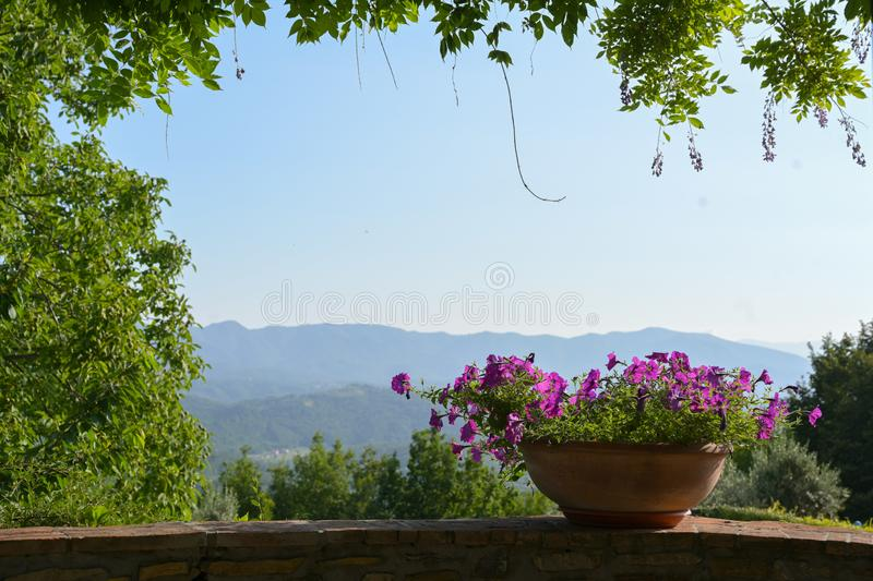 Rustic flower pot with purple petunias on the wall of an overgrown balcony in front of a southern landscape with blue sky and copy. Space royalty free stock images