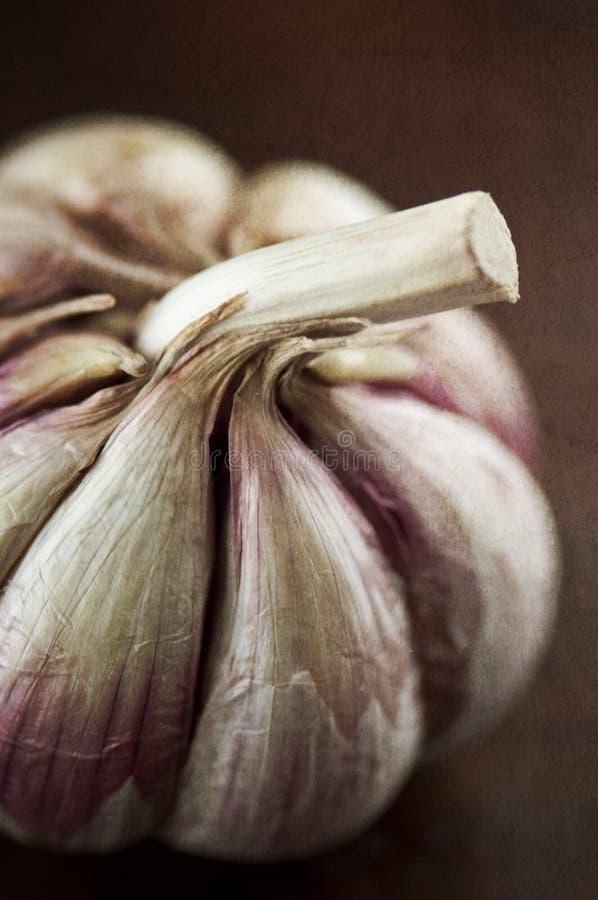Free Rustic Garlic Royalty Free Stock Photo - 22822835