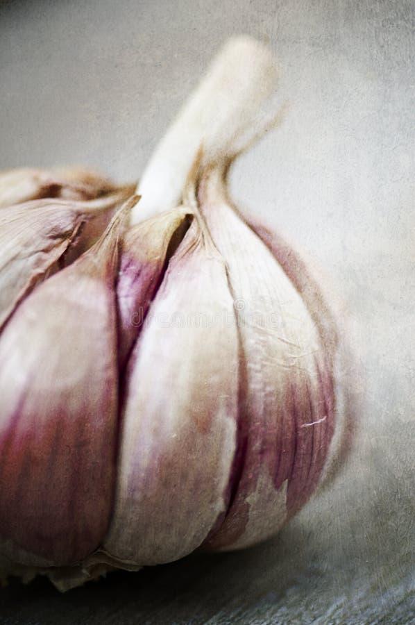 Free Rustic Garlic Bulb Royalty Free Stock Photography - 22822817