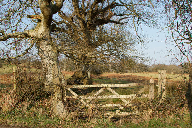 Download Rustic gate. stock image. Image of posts, blue, rustic - 23712145