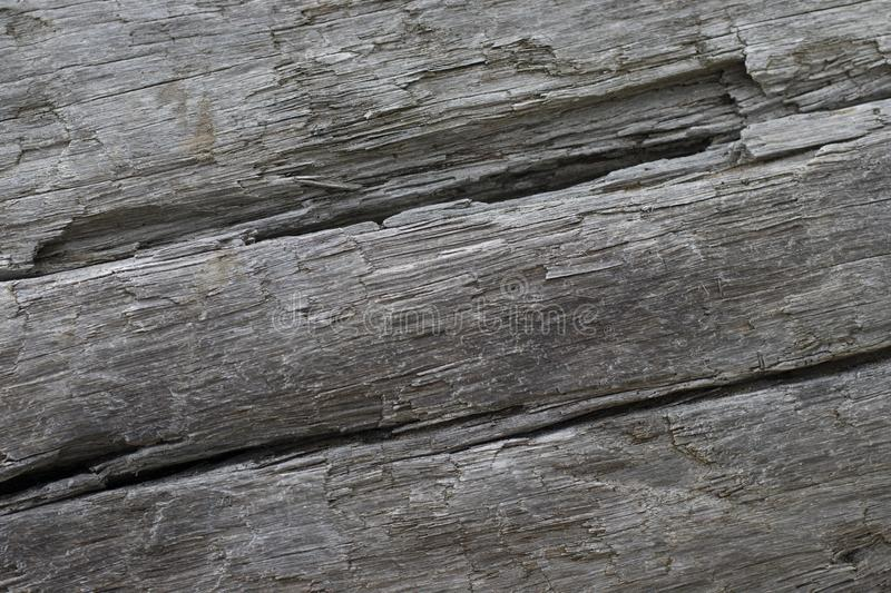 Rustic grey driftwood log background with copy space stock photos