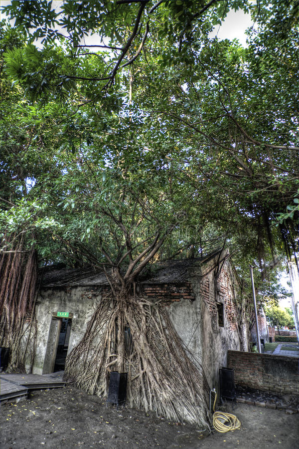 Download Rustic house stock photo. Image of tree, house, tropical - 23241058