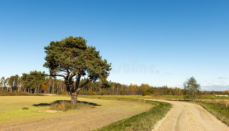 Landscape with countryside road and lonely pine royalty free stock photos