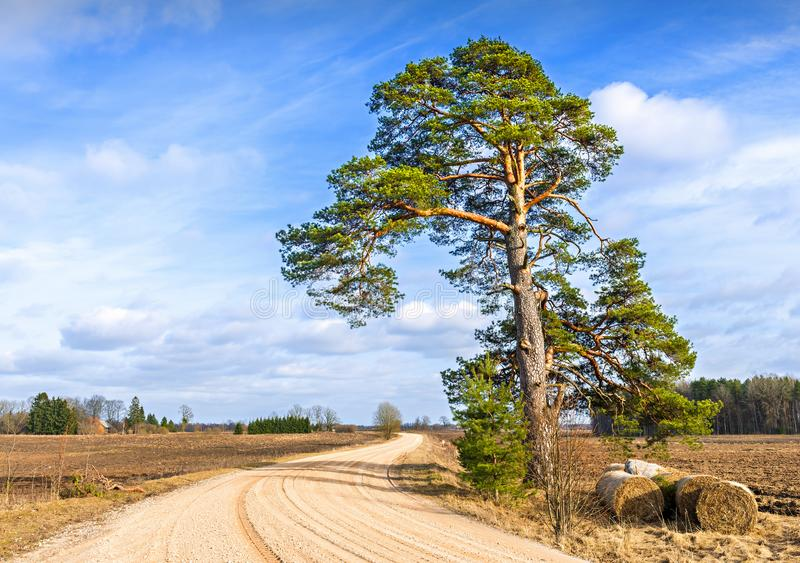 Rustic landscape with countryside road and lonely pine stock photos