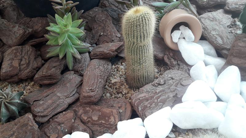 Rustic landscape of terrarium with cactus. Rustic landscape of terrarium with gravel cactus and white stone path royalty free stock image