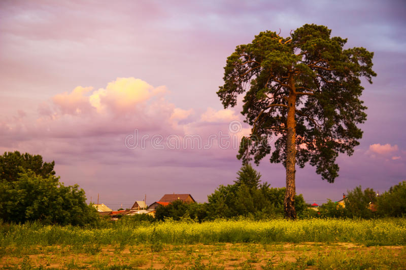 The rustic landscape with trees and colorful sky at the sunset. Tyumen, Russia. The rustic landscape with trees and colorful sky at the sunset royalty free stock image