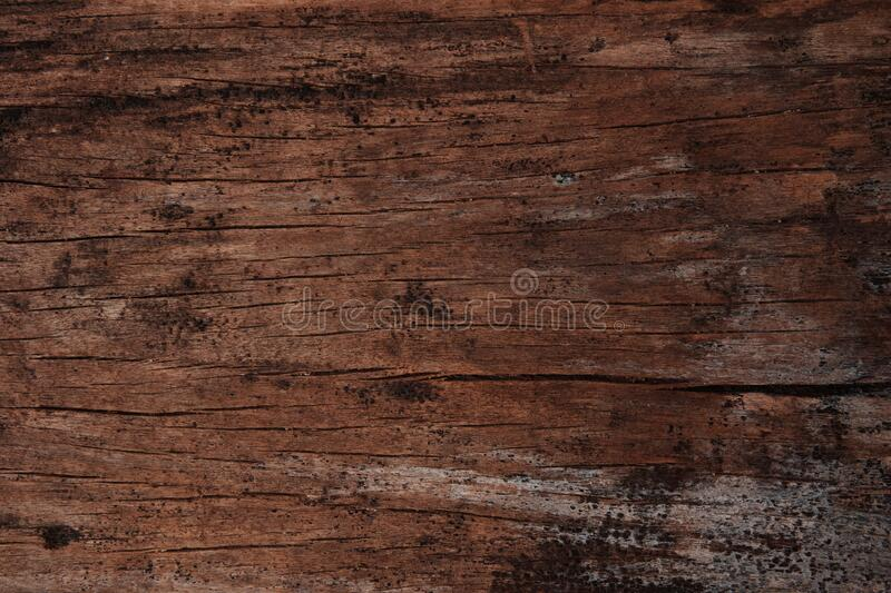Rustic old wooden plank for background and design concepts. Rustic old wooden plank or board. This texture is often found on the walls of traditional wooden royalty free stock photo