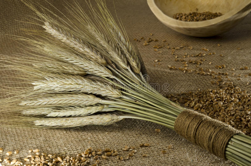 Rustic setting with wheat sheaf and grains. Rustic still life with wheat sheaf and grains stock photography