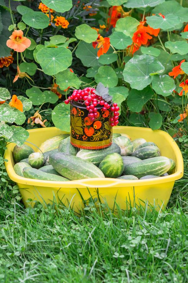 Rustic still-life. Gifts of nature, produced by hard peasant labour. stock photo
