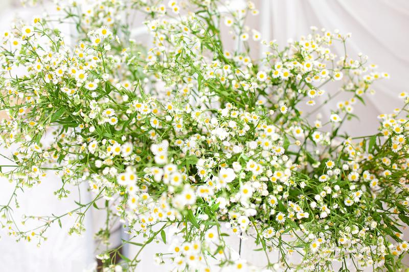 Rustic still life. Wooden box with field white daisies blooms in the bright, cozy interior of the bedroom. White wall, sunlight fr royalty free stock photos