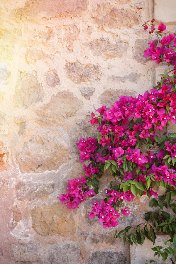 Rustic stone wall with colorful flowers stock images