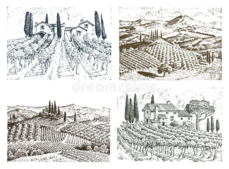 Rustic vineyard. rural landscape with houses. solar tuscany background. fields and cypress trees. harvesting and. Haystacks. engraved hand drawn in old sketch royalty free illustration
